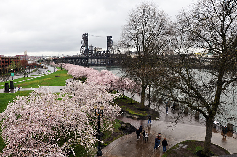 A Guide to Biking in Portland, OR
