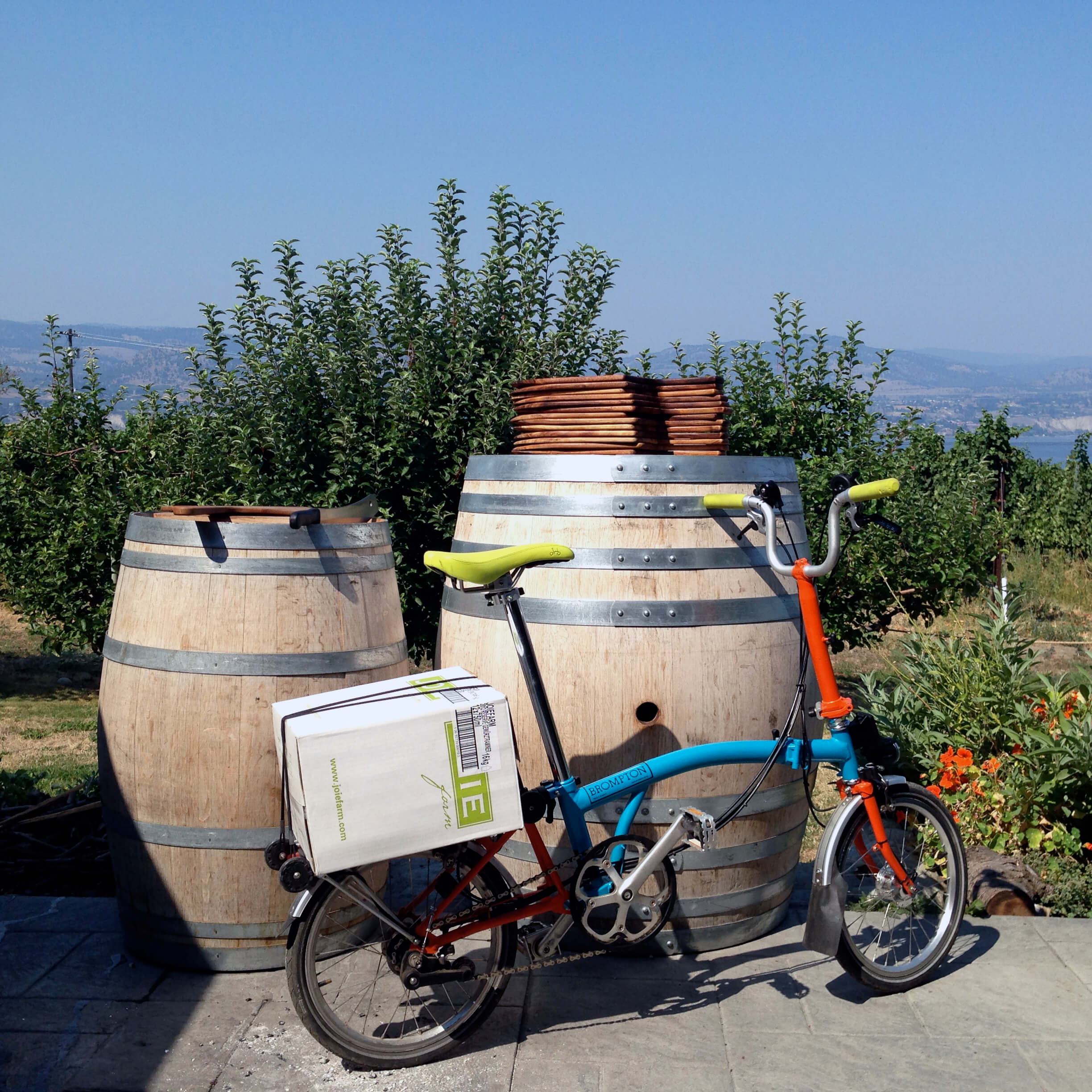 bicycle vineyard tour