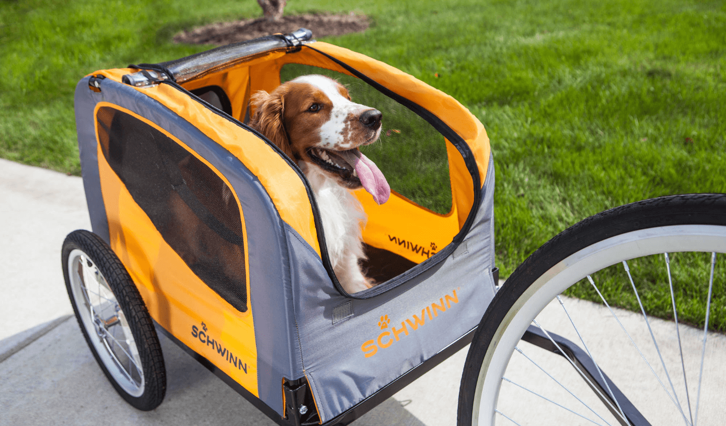 How to Bike With Your Dog | Momentum Mag