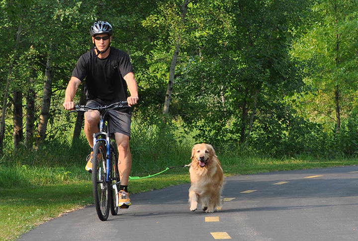 Woof Cycle Bike Trotter Review