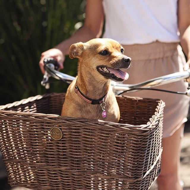 5 Ways to Carry Pets by Bike